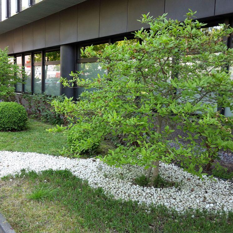 Bürocenter Nord Detailansicht Bepflanzung Beete vor Bürohaus