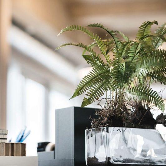 Stimmungsbild Farn in Vase auf Schreibtisch
