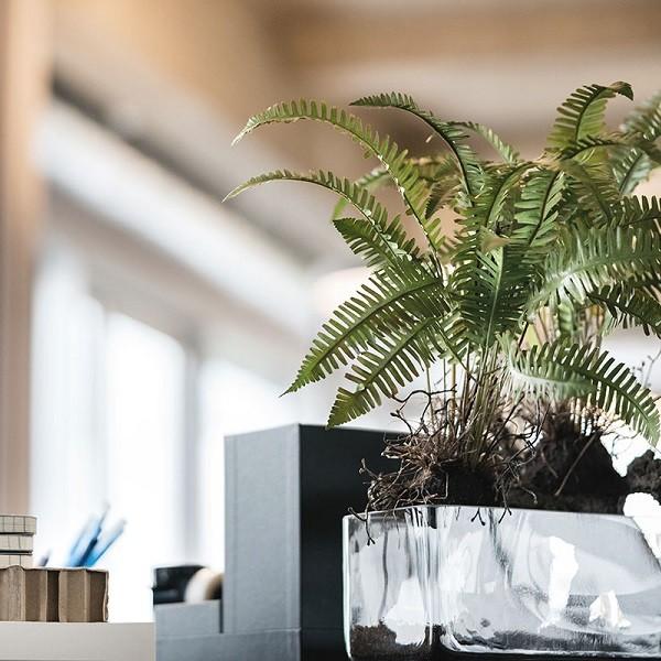 Farn in Vase auf Schreibtisch