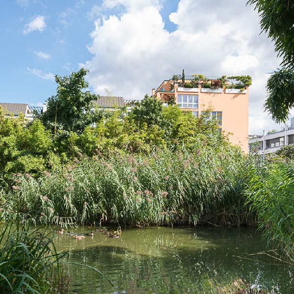 Prinzenpark park view over bamboo overgrown duck pond to residential building facades